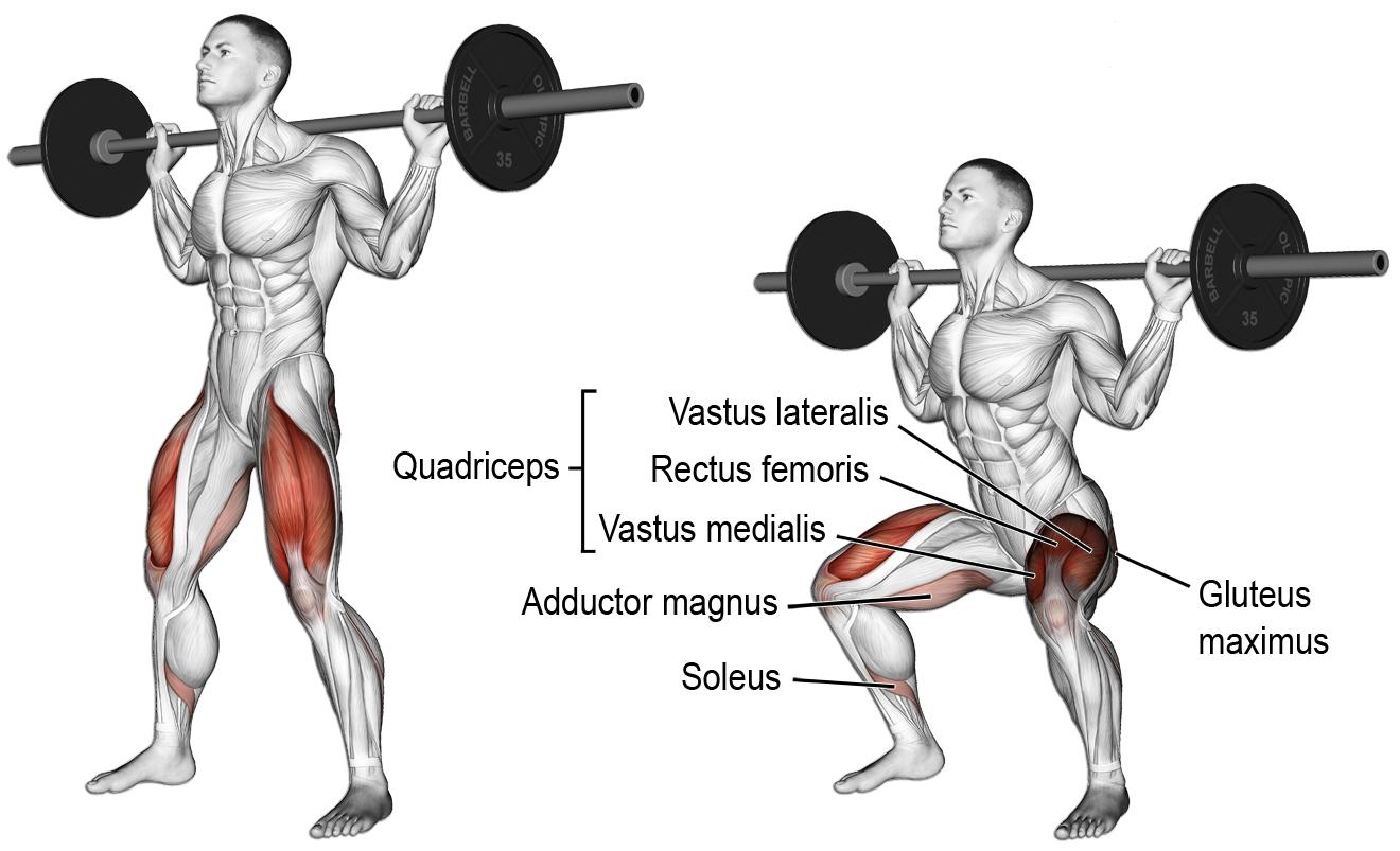 Exercícios Para Ganhar Massa Muscular agachamento livre