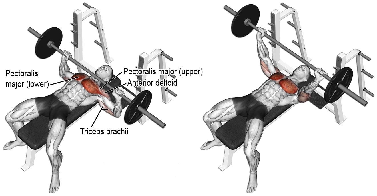Exercícios Para Ganhar Massa Muscular supino reto