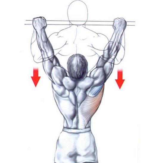 Exercícios Para Ganhar Massa Muscular barra fixa