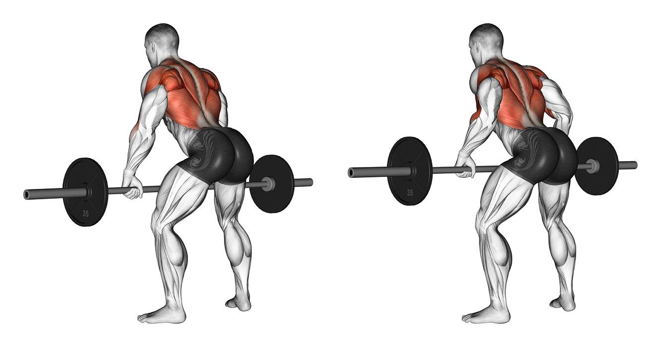 Exercícios Para Ganhar Massa Muscular remada curvada