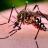 Dengue, Zika e Chikungunya: Saiba a diferença entre as doenças!