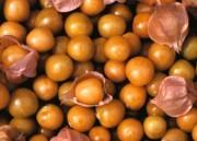 Golden Berry: Uma revolução na sua saúde!