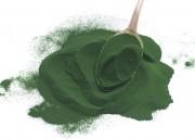 Spirulina: Conheça os benefícios dessa alga!
