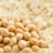 Soy Protein: Descubra para que serve e seus benefícios!