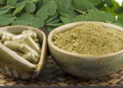 Moringa Oleifera: Saiba tudo sobre esse importante vegetal!