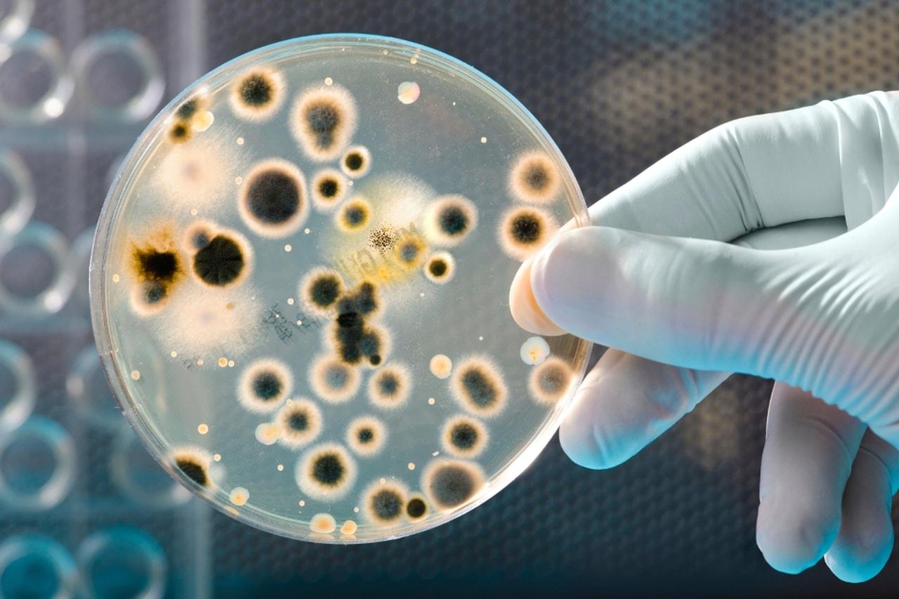 combater bactérias