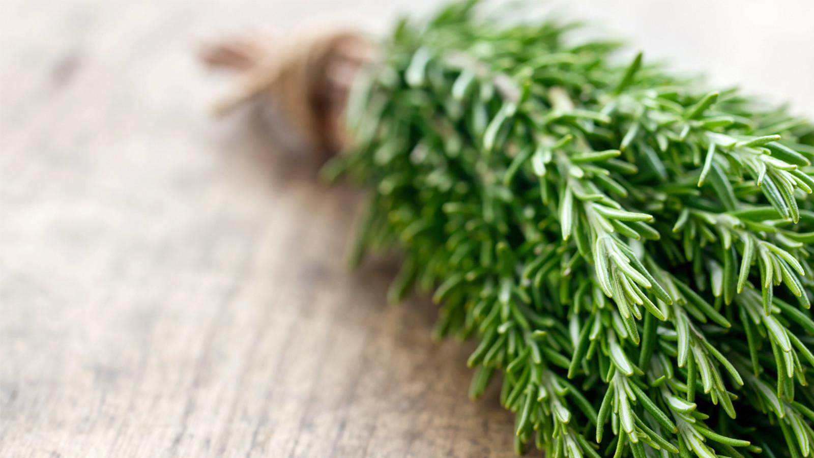 como usar o óleo essencial de alecrim?