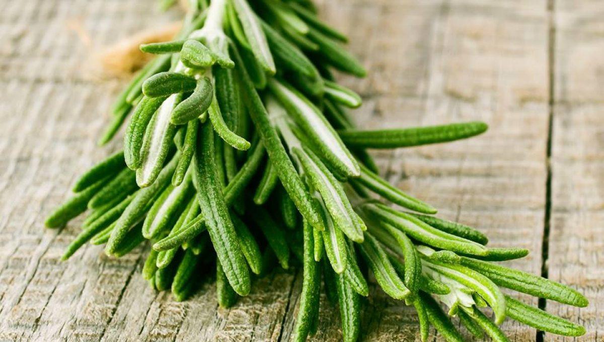 benefícios do óleo essencial de alecrim